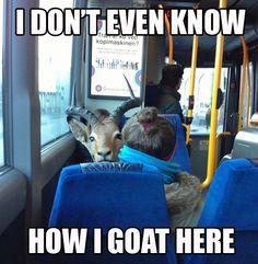 goat-meme-2
