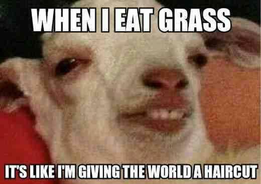 goat-meme-4